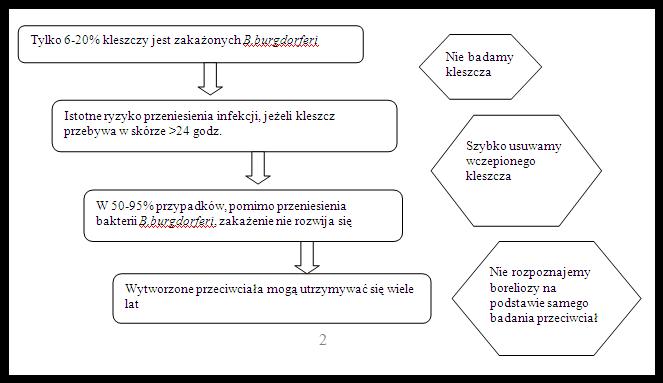 Borelioza z Lyme Ryc. 2