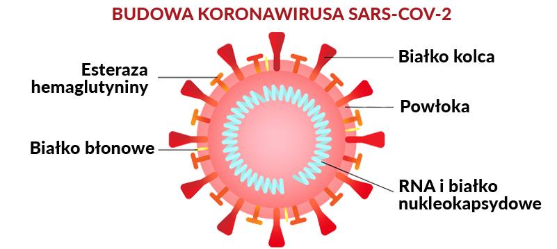 koronawirus jak wygląda koronawirus